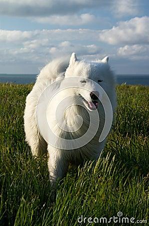 Hond op de wind