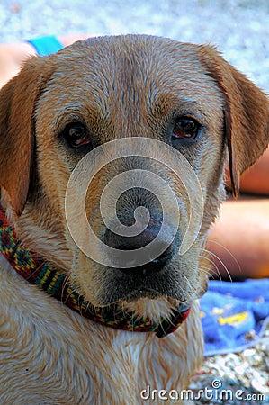 Hond in schaduw