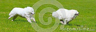 Hond twee