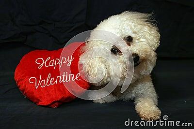 Honden 1 van de valentijnskaart