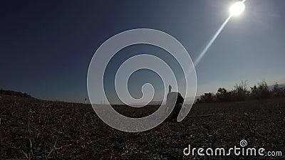Honden die in zonnige dag spelen stock videobeelden