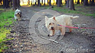 Honden op een leiband in het hout stock footage