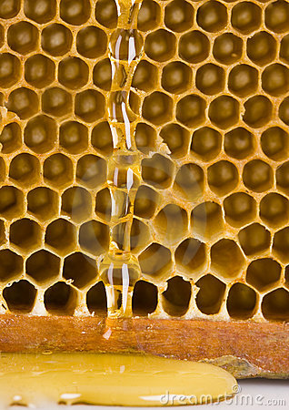 Free Honey Royalty Free Stock Images - 2168919