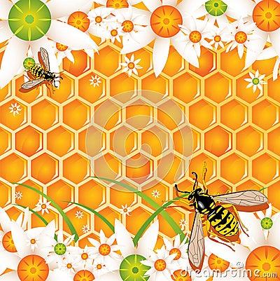 Free Honey Stock Image - 3001131
