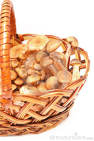 Honey agarics in a basket