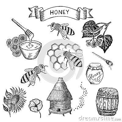 Free Honey And Bee Stock Photo - 38933610