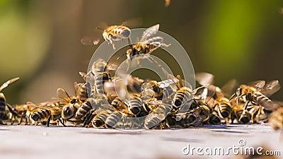Honey Bees Fighting With Aliens Geschoten op Canon 5D Mark II met Eerste l-Lenzen stock video