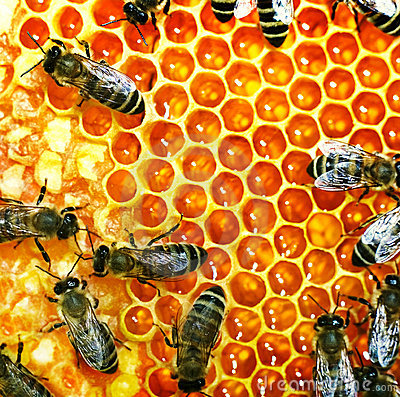 Free Honey Bees On The Hive Stock Photo - 15049360