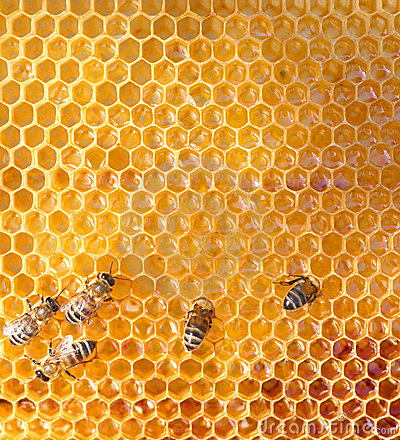 Honey cells and  bees