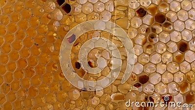 Honey Comb fragmento do favo de mel, fundo abstrato vídeos de arquivo