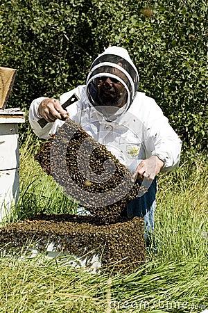 Honey Farmer