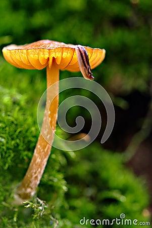 Honey mushroom and slug