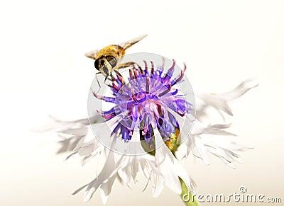 Honey search