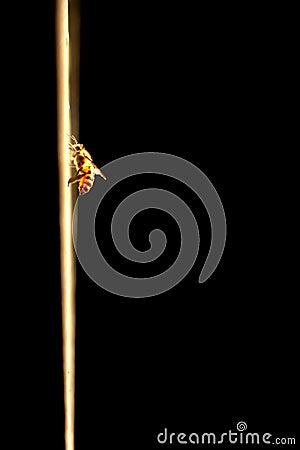 Free Honeybee On Wall In Sunlight Stock Image - 116441671