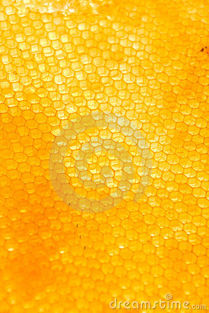 Free Honeycomb Stock Photography - 6396462