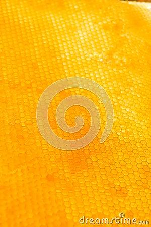 Free Honeycomb Stock Photography - 6396632