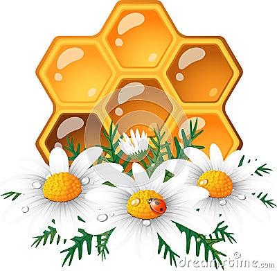 Honeycomb and daisy