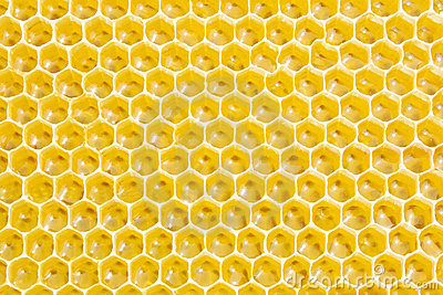 Yellow honey background with hexagonal pattern vector free download - Honeycombs Royalty Free Stock Photo Image 15566875
