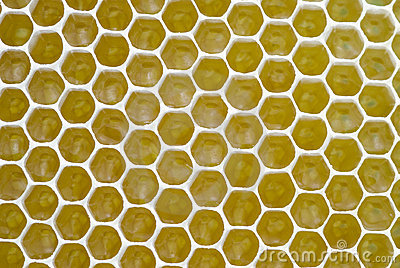 Honeycombs Background Royalty Free Stock Photography - Image: 6655987
