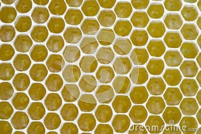 Honeycombs background