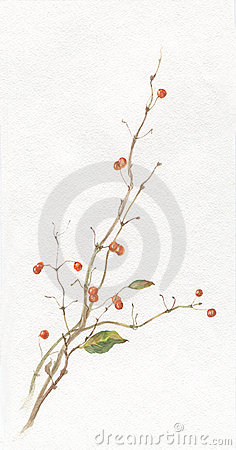Free Honeysuckle Berries Watercolor Drawing Stock Photography - 4083582