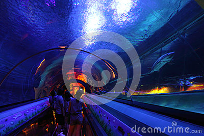 Hong Kong : Ocean Park Editorial Photo