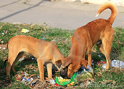 Hongerige honden