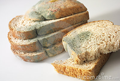Hongo en el pan
