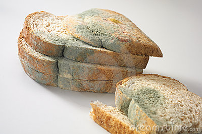 Hongo en el pan foto de archivo imagen 9754520 - El moho es un hongo ...