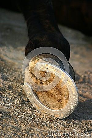 Free Hoof Of Horse Stock Image - 1881591