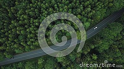 Hoogste mening over verbazende weg met auto's in bos in Duitsland stock video