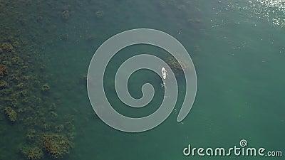 Hoogste mening van lucht Sup de surfer zwemt tussen algen behandelde rotsen op supboard stock footage