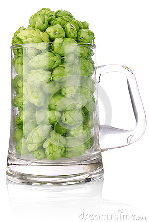 Hop in glass for beer