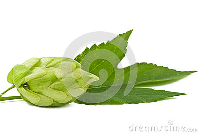 Hop isolated