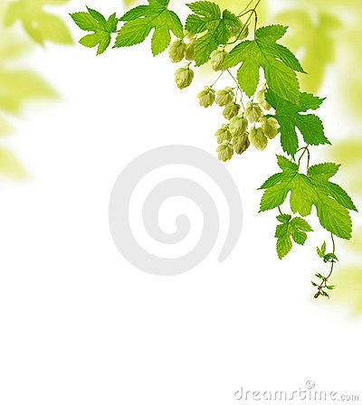 Free Hop Plant Border Royalty Free Stock Photos - 18902888