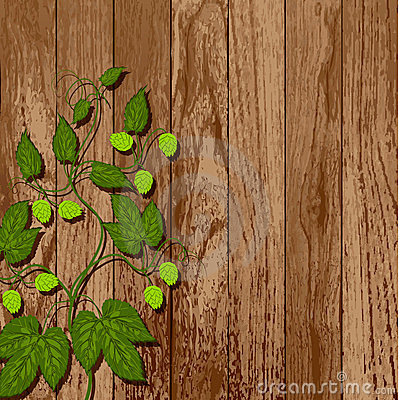Hop Vine On A Wooden Wall. Stock Image - Image: 23523821