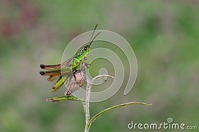 A hopper