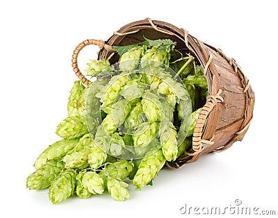 Hops in a wooden basket