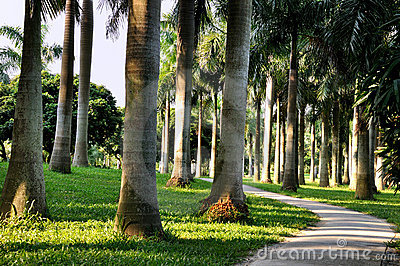 Horisontal palmträd