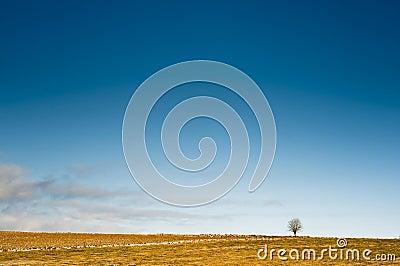 Horizon with a tree