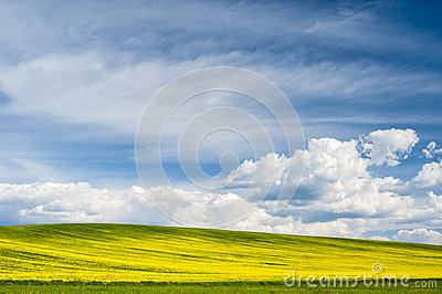 Horizon with yellow field