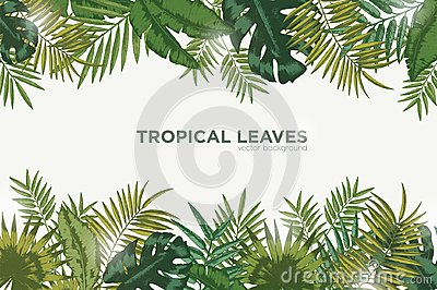 Horizontal background with green leaves of tropical palm tree, banana and monstera. Elegant backdrop decorated with Vector Illustration