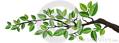 Horizontal banner with isolated tree branch with green leaves Vector Illustration