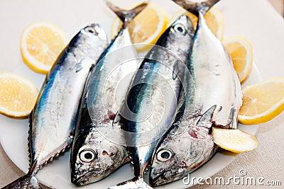Horizontal beautiful mediterranean mackerels