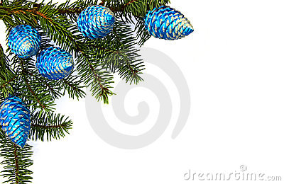 Horizontal image of fir brunch