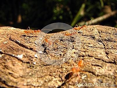 Hormigas trabajadoras