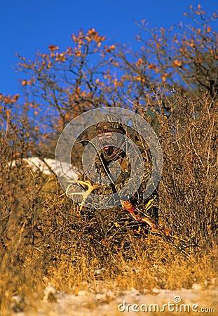 Horn på kronhjortbowhunterrasslande