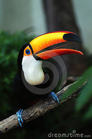 Free Hornbill Royalty Free Stock Images - 977339
