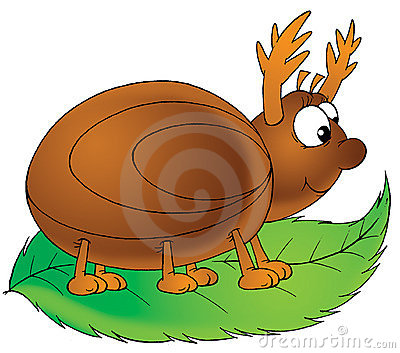 Horny bug