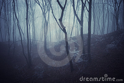 Horror scene of a dark forest with blach trees